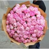 101 розовый пион Сара Бернар